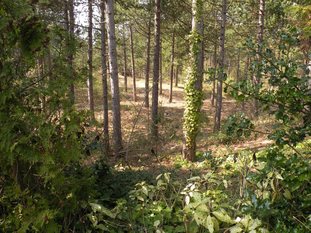 Studio Arma, uw uitzicht vanaf het terras het bos in.