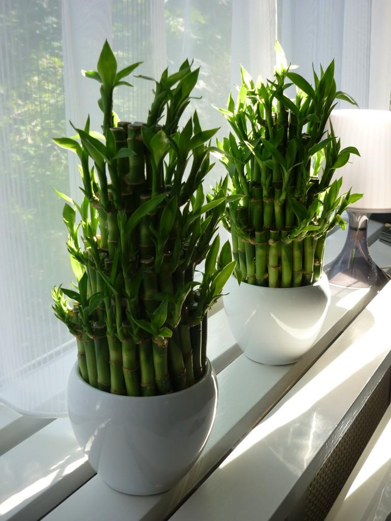 Studio Arma, vensterbank met plantjes